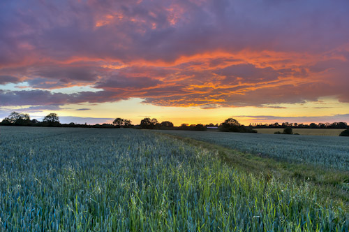 Field at sunset _GE05594_5_8_blog