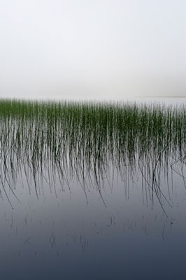 Reeds-266x400