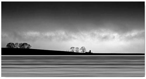 Tree-lines-500